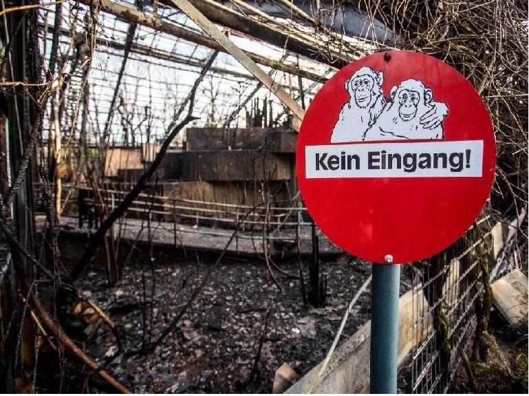Trágico año nuevo para 30 animales de un zoológico de Alemania