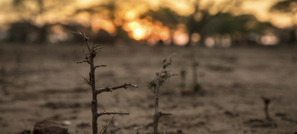 """Advierten que sur de África enfrenta crisis alimentaria """"no vista hasta ahora"""""""