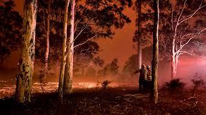 Resultado de imagen para animales australia incendios