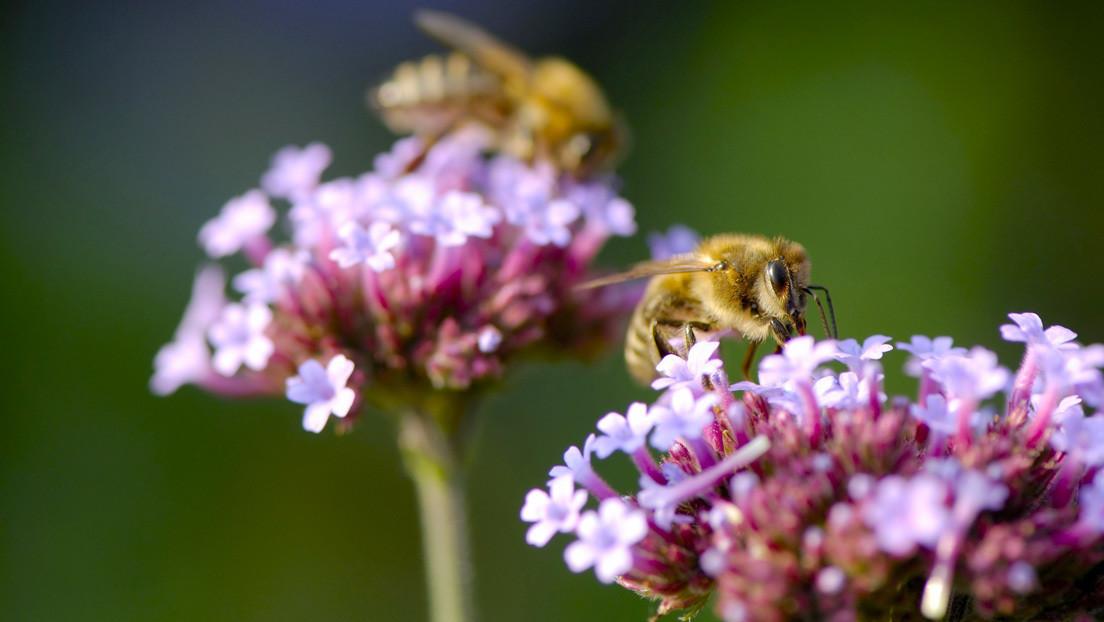 """Ecologistas confirman profecías de un """"apocalipsis de insectos"""""""