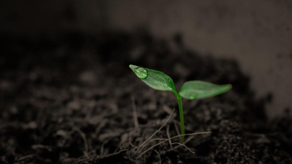 Científicos japoneses crean dispositivo tecnológico biodegradable