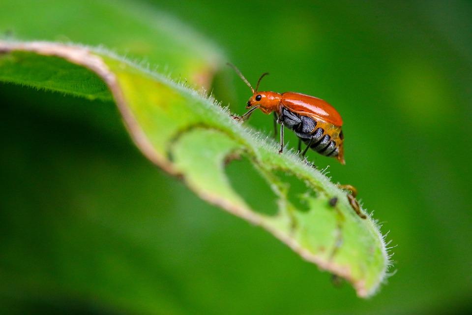 Se encienden las alarmas por la veloz disminución de los insectos