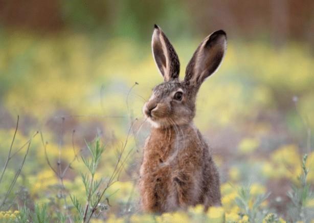 En Italia los conejos ocupan parques que se encuentran solitarios por la pandemia