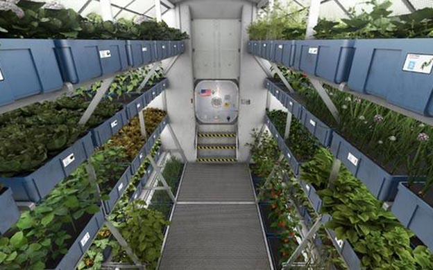 ¿Comida extraterrestre? Logran cultivar en el espacio lechugas aptas para el consumo humano