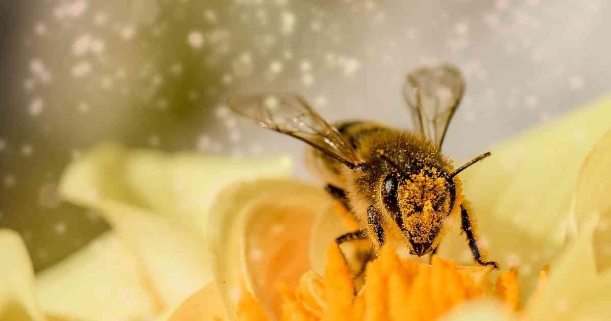 La exposición a insecticidas  perjudica el aprendizaje de las abejas
