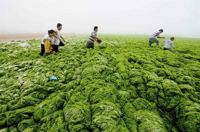 ¡1.000 millones de años! Las algas verdes de China son las más antiguas del planeta