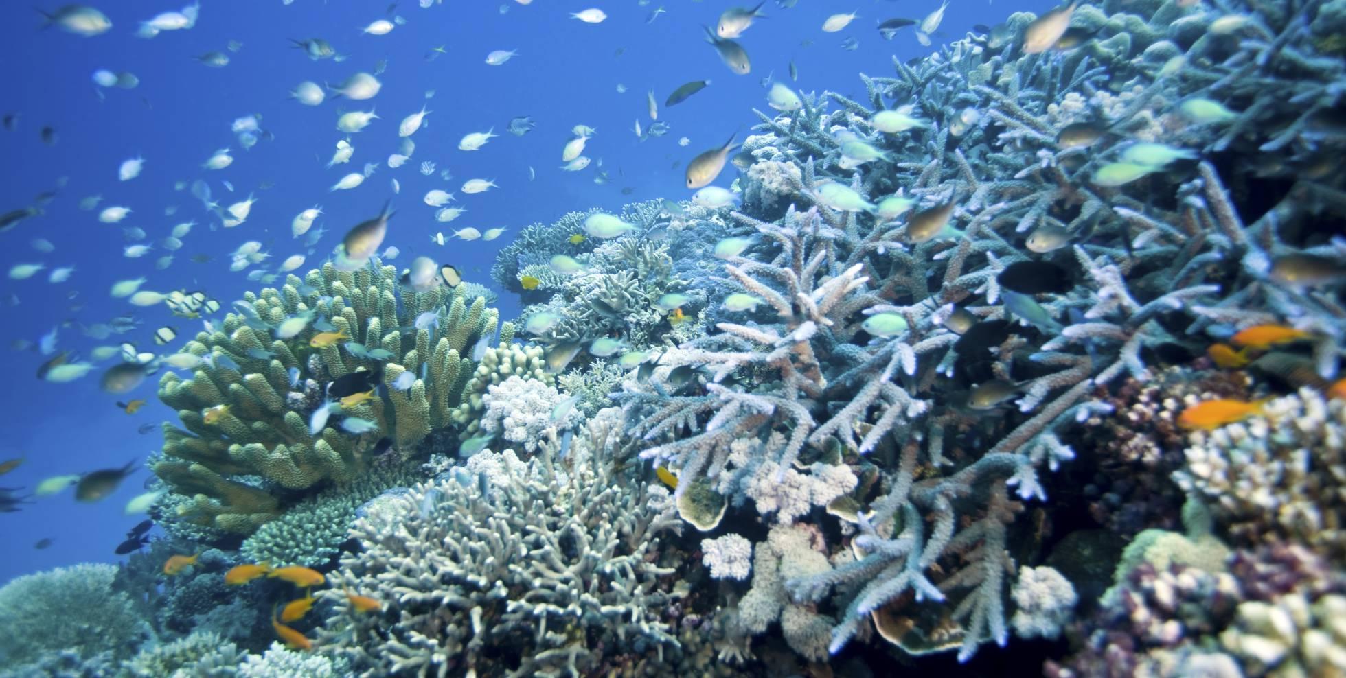 Australia impugna declaración de Barrera de Coral como patrimonio en peligro