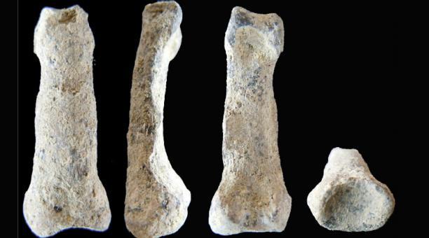 (Video) Un fósil de pez de hace 380 millones de años revela cómo evolucionó la mano humana