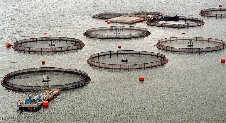 Chiloé: Gobierno y empresas anuncian acuerdo para rebajar número de trabajadores en plantas salmoneras