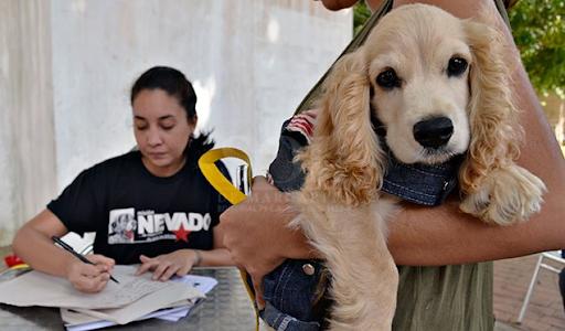 Pandemia: Venezuela no olvida a las mascotas ante el COVID-19