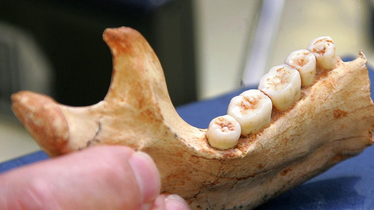 (Fotos) Científicos descubren fósil humano de 800 mil años de antigüedad