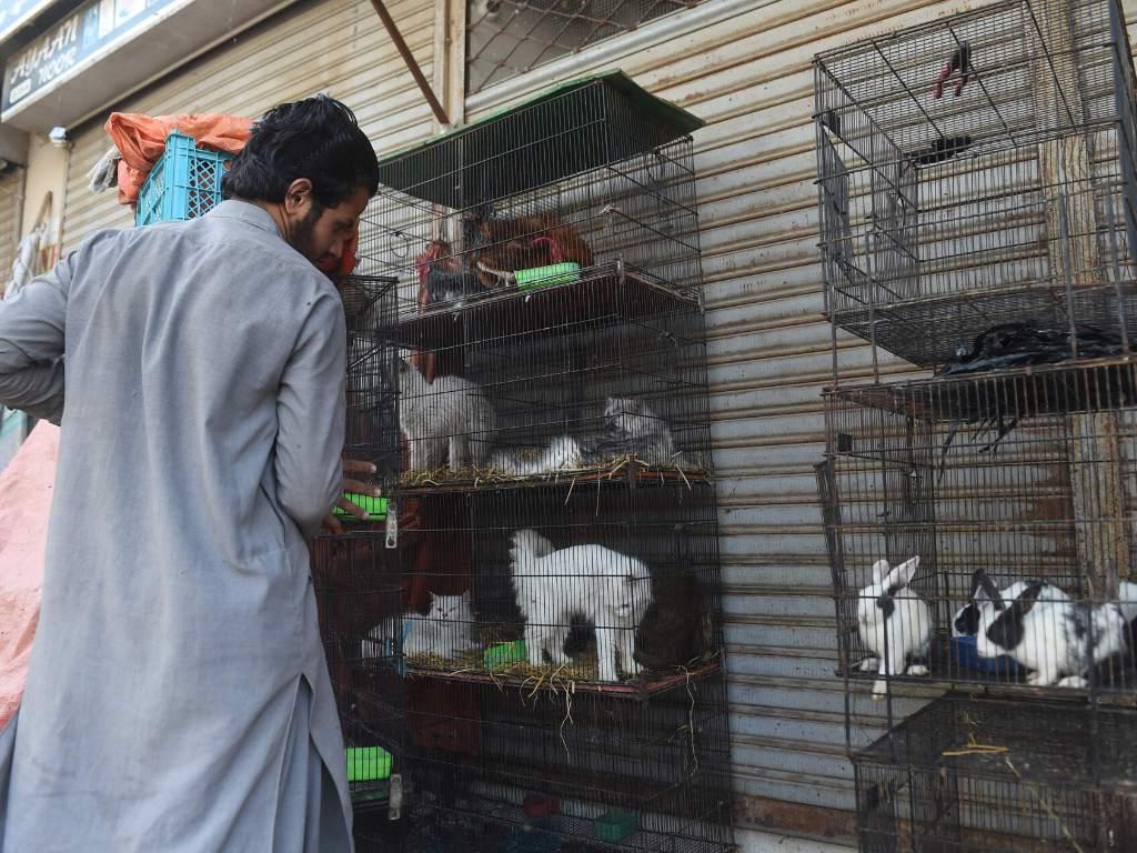Cientos de perros y gatos son víctimas indirectas del Covid-2019 en Pakistán