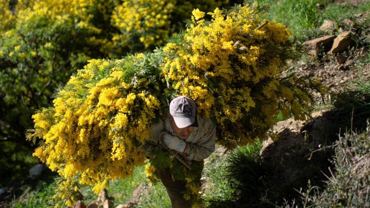 Sequía inesperada impacta a sector agrícola italiano: La primavera más árida en los últimos 60 años