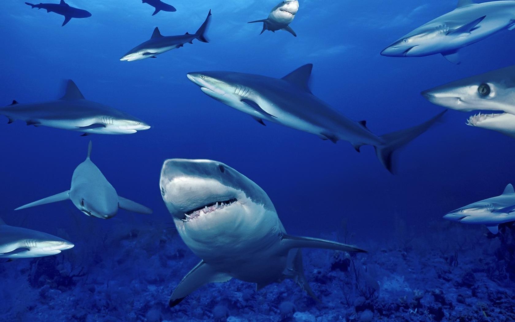 (Fotos) Crueldad animal: asesinan a tiburón en peligro de extinción junto a sus crías en Colombia