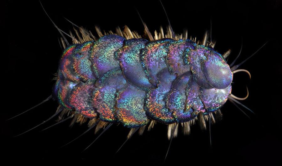 (+Video) Descubren cuatro especies de «gusanos» de aguas profundas