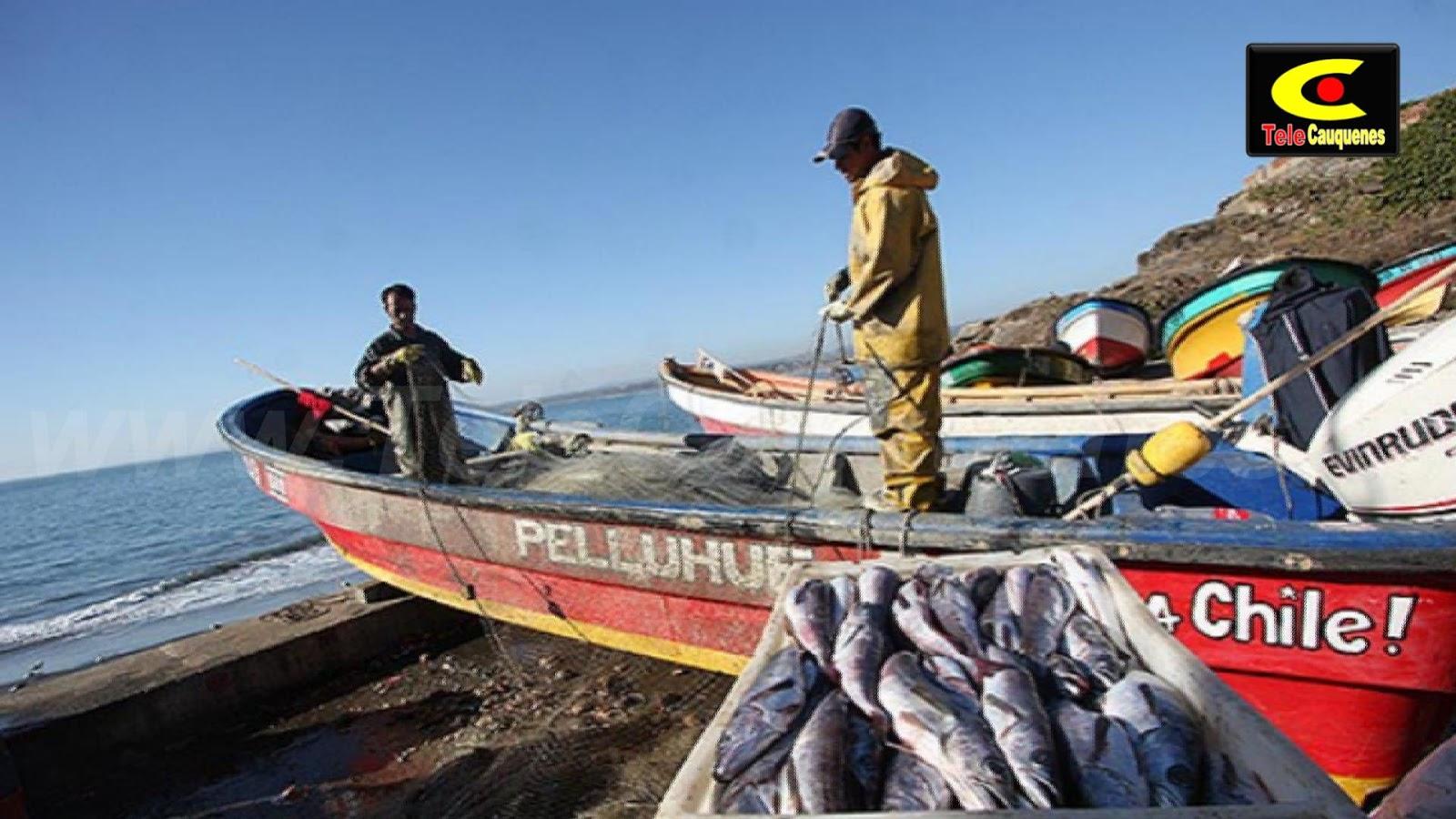 Chile, país pesquero y oceánico: Un desafío para la nueva Constitución
