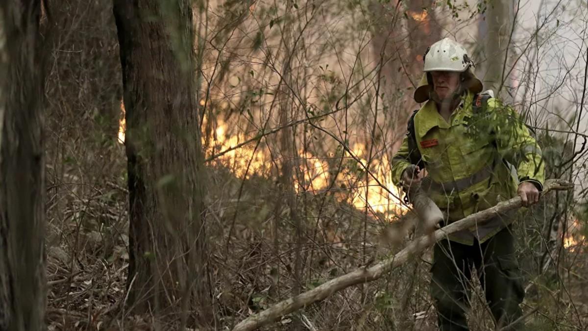 Primer Ministro de Australia asigna 129 millones de dólares en plan para recuperación de la vida silvestre tras graves incendios forestales