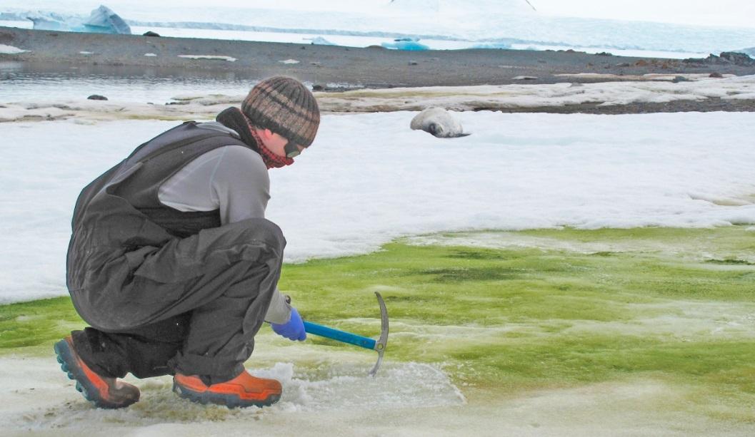 Una 'nieve verde' amenaza con cubrir la costa de la Antártida
