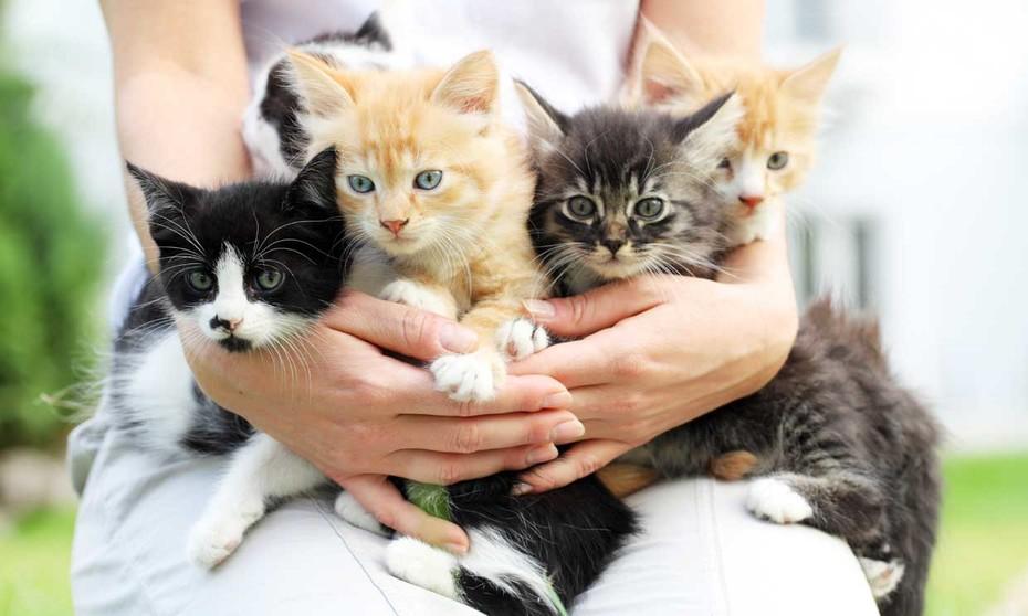 Gato doméstico infectado con coronavirus se recupera en Gran Bretaña