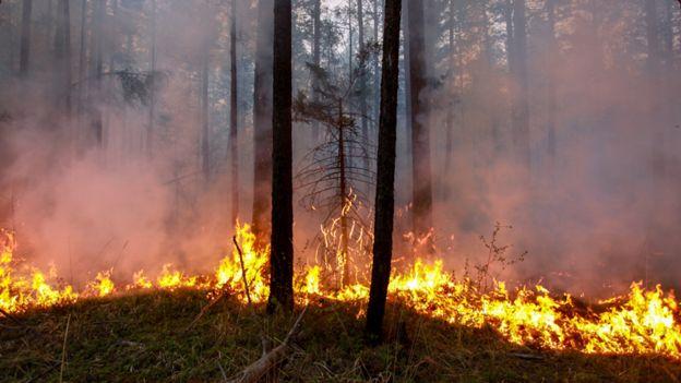 ¿Se reavivaron los «incendios zombis» esparcidos por el Ártico?