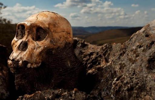 Hace dos millones de años, los Australopitecos se movían entre árboles y manipulaban objetos