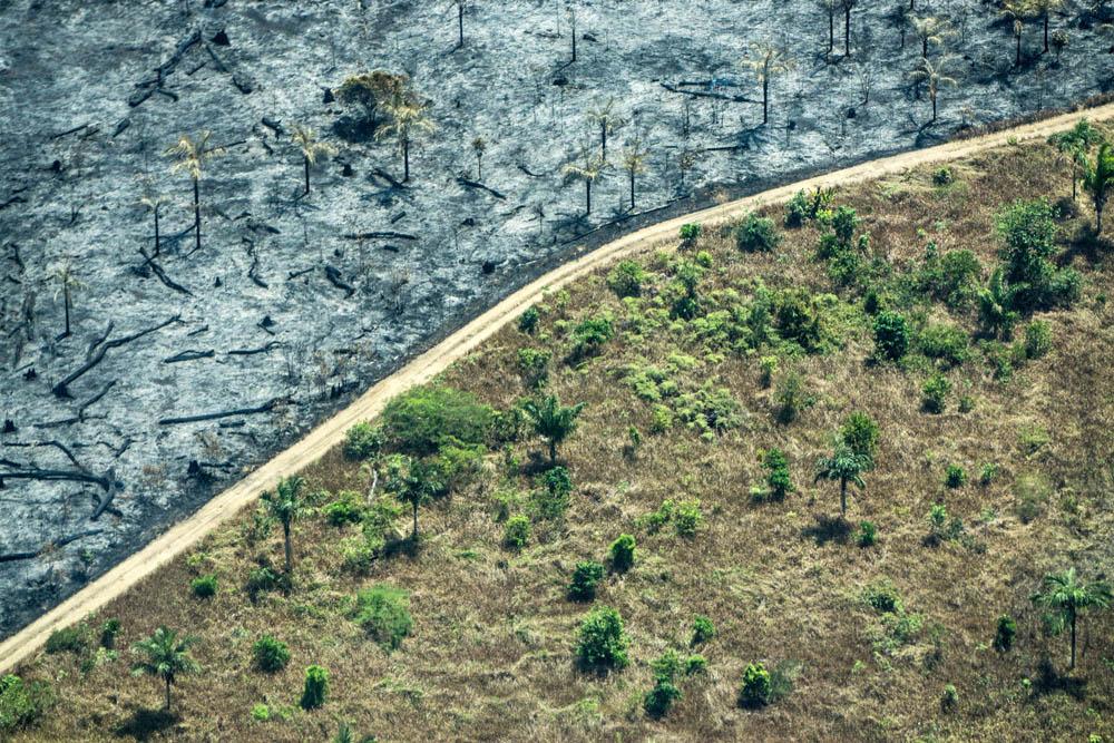 Greenpeace en Día del Medioambiente: 'Es hora de construir un desarrollo humano diferente, que ponga en el centro la salud planetaria'