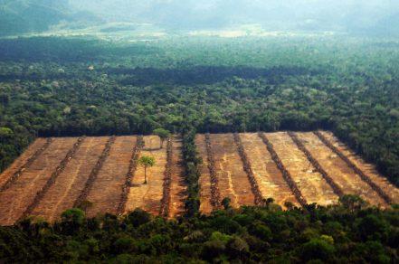 Para evadir la culpa, Bolsonaro planea divulgar qué países importan madera ilegal de Amazonía brasileña