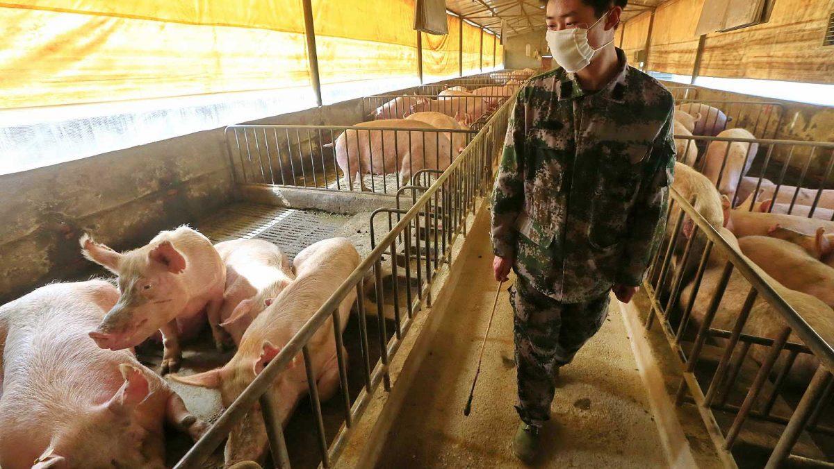 Animales de granja y mascotas serán el blanco siguiente del SARS-CoV-2