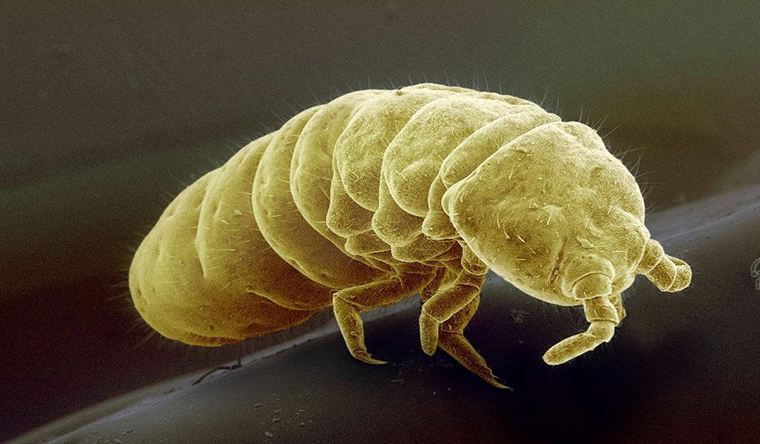 Detectan microplásticos en el intestino del animal más aislado de la Tierra