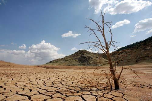 5,2 millones de hectáreas de bosques desaparecen anualmente de la superficie mundial