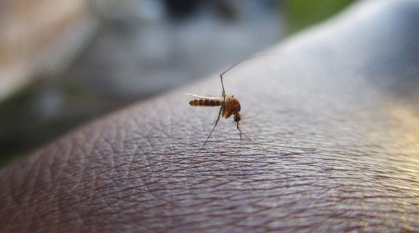 Brasil: descubren nueva cepa del zika y advierten que hay «riesgo potencial de una nueva epidemia»