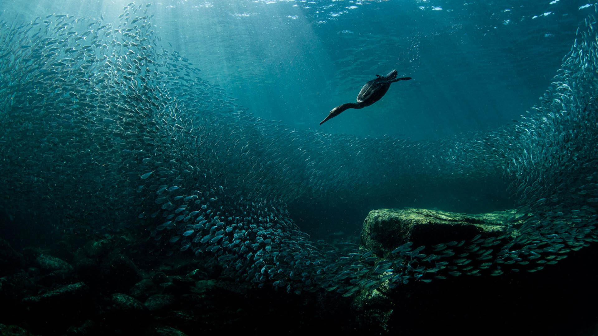 (+ Fotos) Increíble imagen de un ave gana The 2020 Audubon Photography Awards