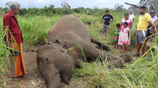 Esta podría ser la causa de la muerte de cientos de elefantes en África, según pruebas preliminares