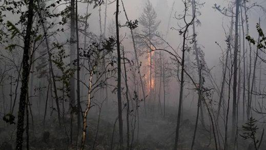 Paraguay decreta estado de emergencia nacional por incendios forestales