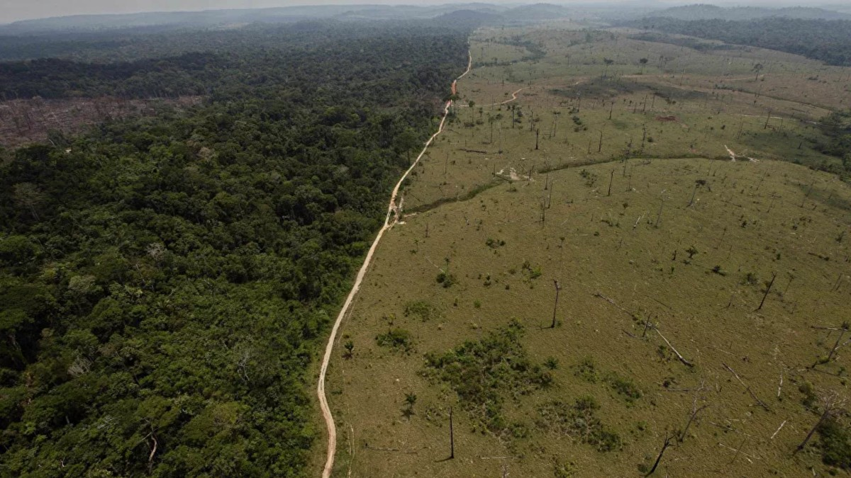 Empresas exhortan al Gobierno de Brasil a tomar medidas contra deforestación en la Amazonía