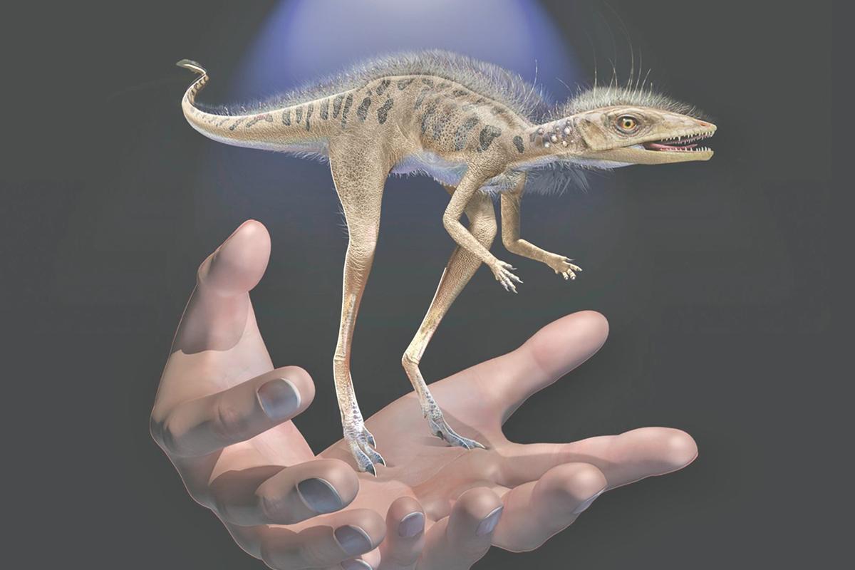 Hallan fósil de un pequeño ancestro de los dinosaurios que cabe en la palma de una mano