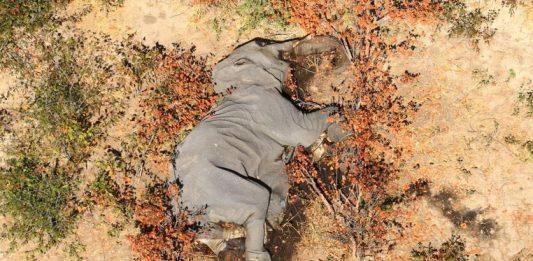 elefante muerto
