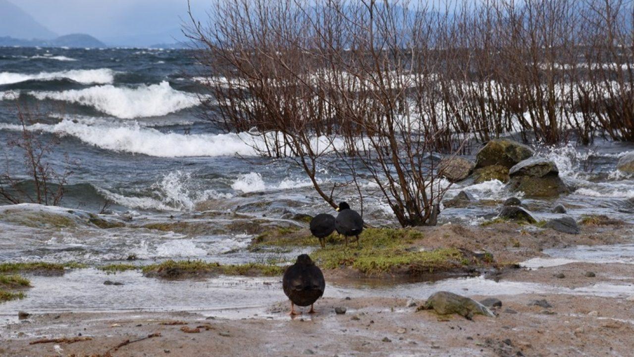 Video denuncia destrucción de humedal en Villarrica