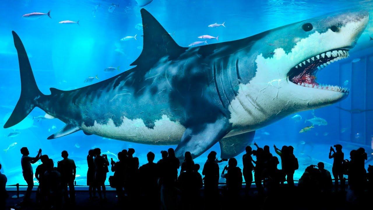 Descubren que el tiburón más grande del mundo tiene dientes en los ojos