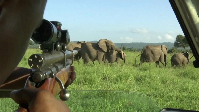 """El """"carnicero de Nouabale Ndoki"""": condenado a 30 años de trabajos forzados por muerte de decenas de elefantes"""
