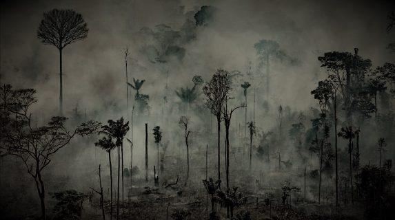 ¡Amazonía en peligro! el bosque tropical esta en proceso de sabanización
