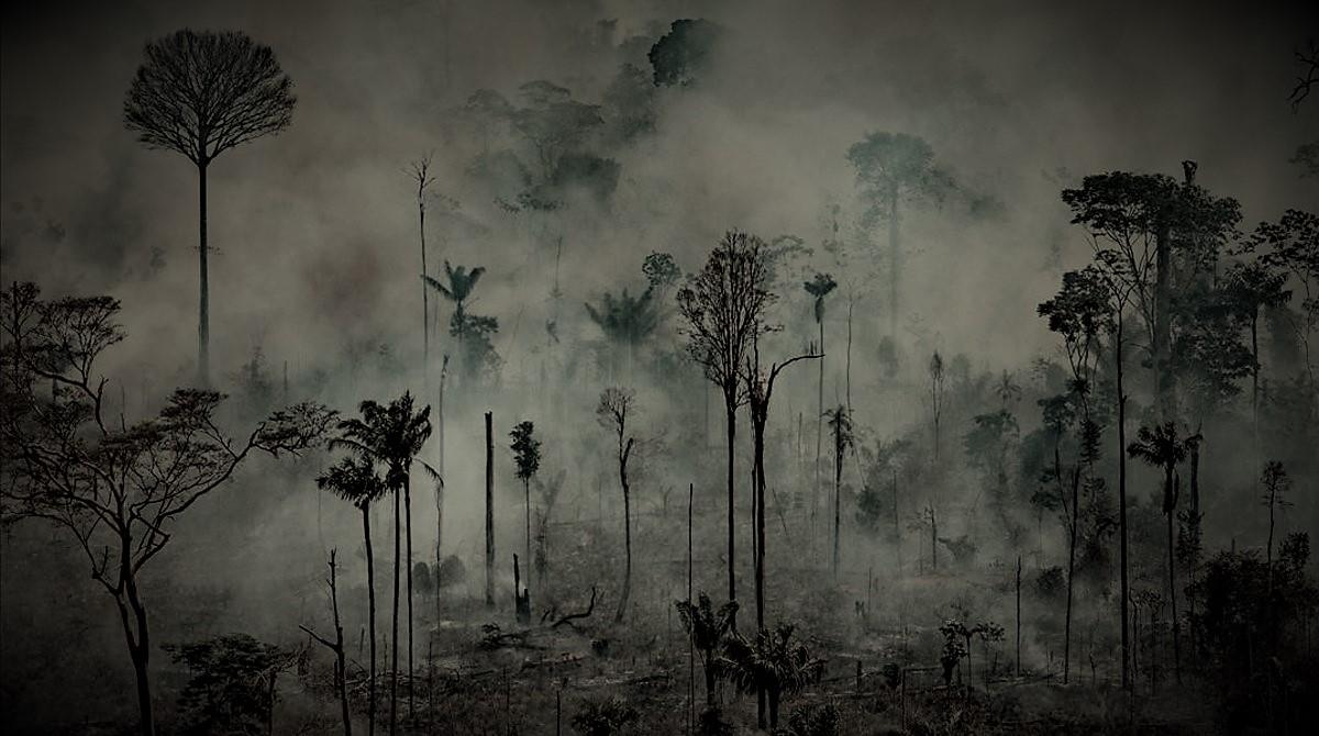 Ni la pandemia frena el extractivismo y la deforestación en la Amazonía