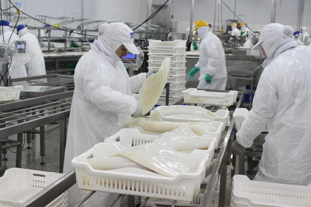 Magallanes: prohíben funcionamiento de 3 plantas pesqueras por incumplir medidas sanitarias