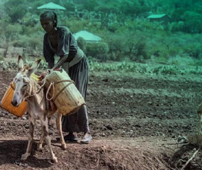 Para la gente del río, no para lxs inversorxs: Garantizar los derechos de lxs agricultorxs a las aguas del Nilo