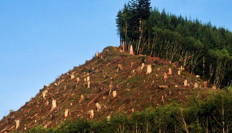 Deforestación de bosque nativo: Denuncian grave incumplimiento de Conaf a resolución de Contraloría