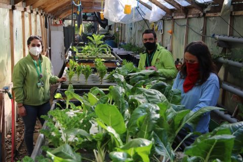 Verduras de huerto escolar apoyan a comedor solidario en El Bosque