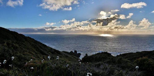 La sagrada isla Guafo se ofrece en el mercado internacional al mejor postor