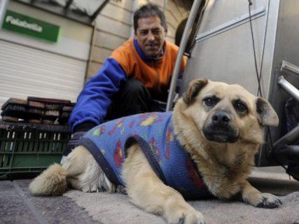 Campaña apoyada por académicos chilenos busca incluir a los animales en la nueva Constitución