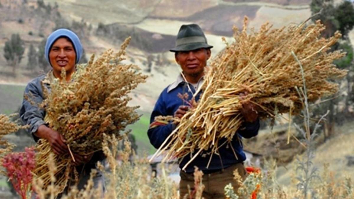 Conozca dos alimentos de origen indígena aptos para erradicar el hambre mundial