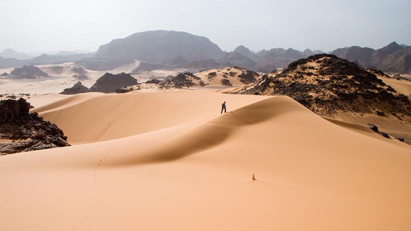 ¿Cuántos árboles hay en los desiertos del Sahara Occidental y Sahel en África?